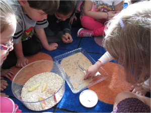 Setting up the baby beetle habitats – counting how many we have
